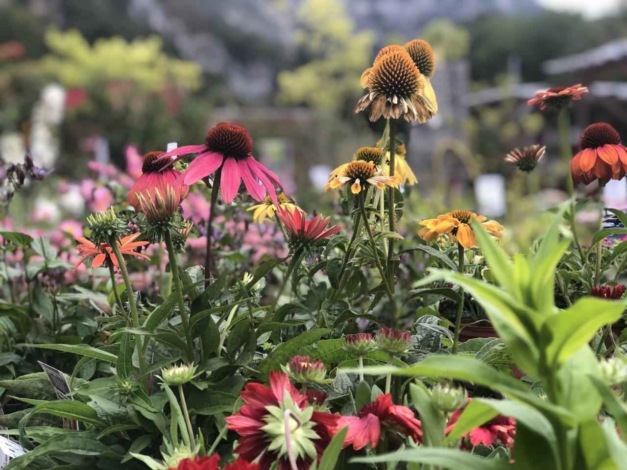 Avec la jardinerie Delbard, préparez votre terre pour le printemps prochain