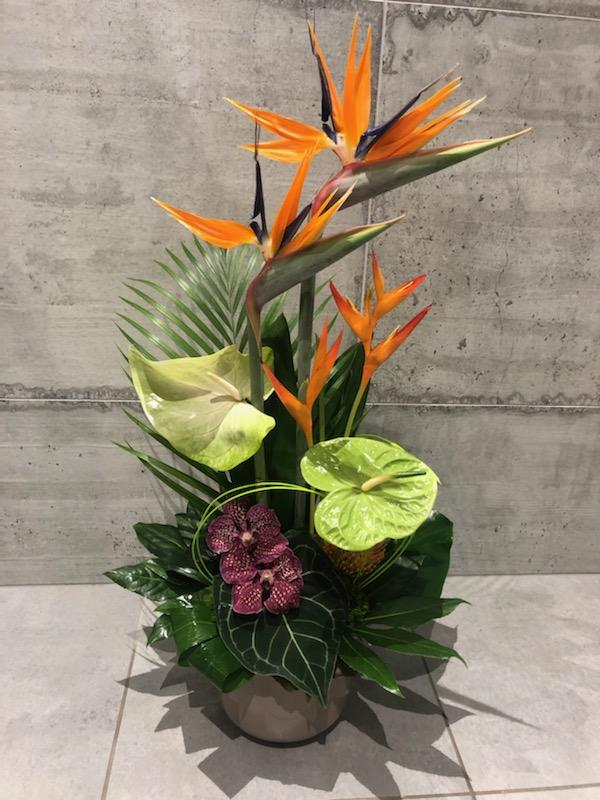 Decurninge fleurs repart à l'aventure à Amphion