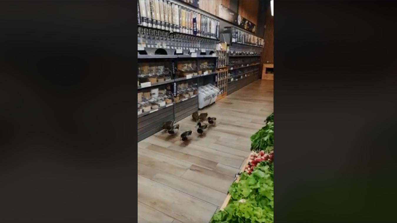 (INSOLITE) Un groupe de canards entre se servir en magasin