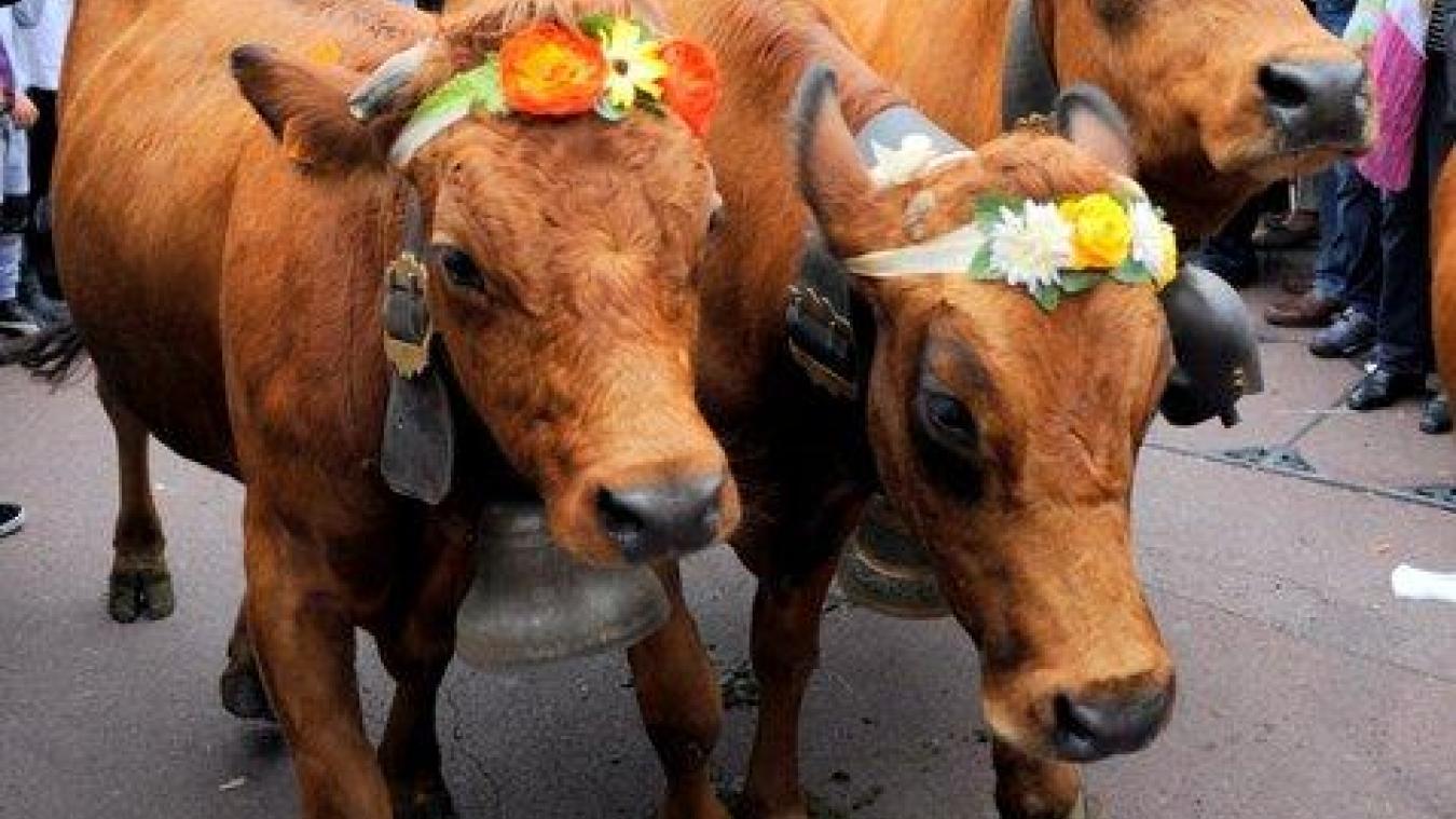 Veaux, vaches, cochons et autres oies seront de la partie. Photos : Philippe Corbex.