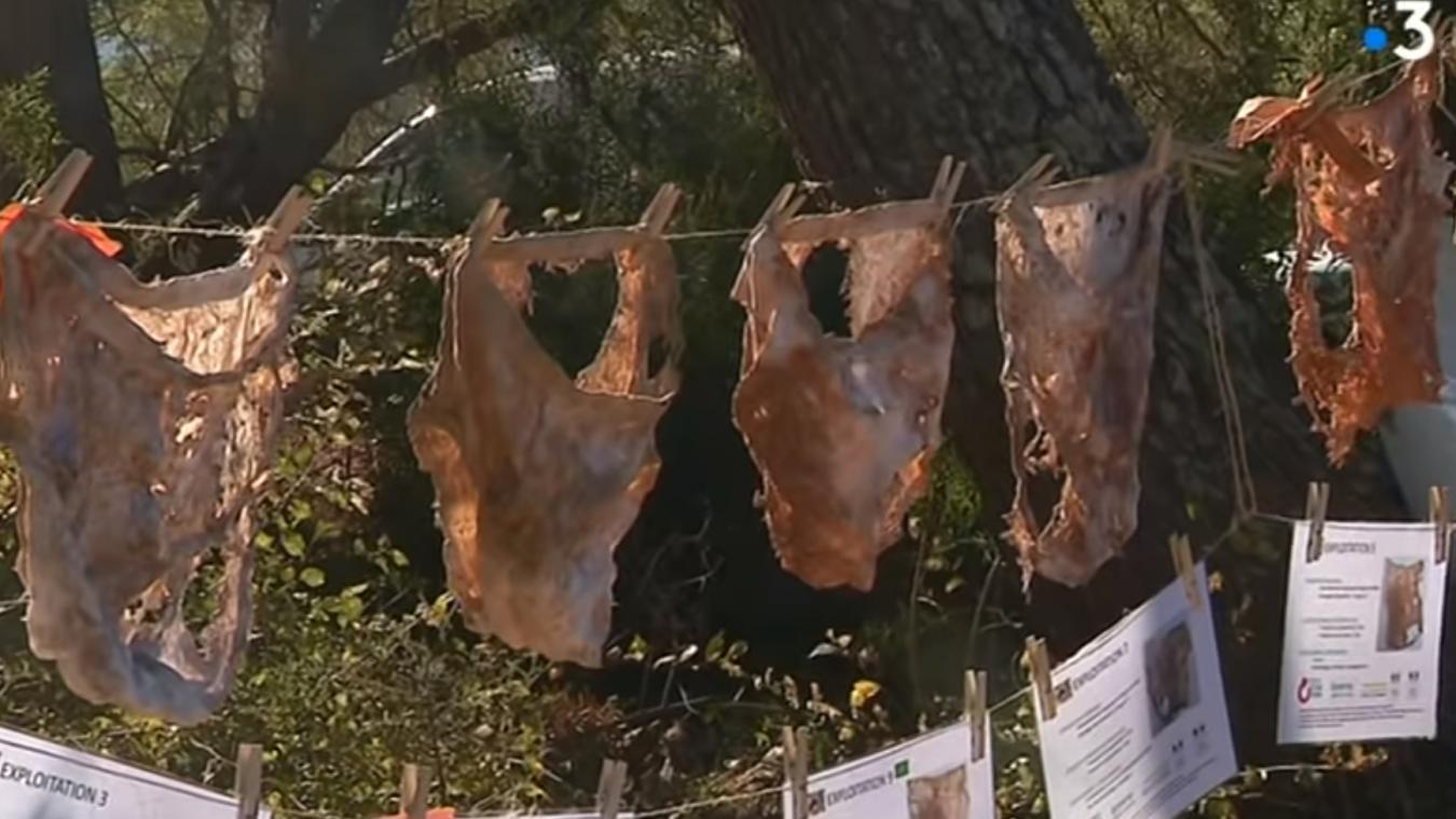 La Chambre d'agriculture du Var a enterré des slips en coton bio au milieu d'exploitations agricoles pendant deux à trois mois pour étudier l'impact des pratiques agricoles sur l'activité biologique des sols.