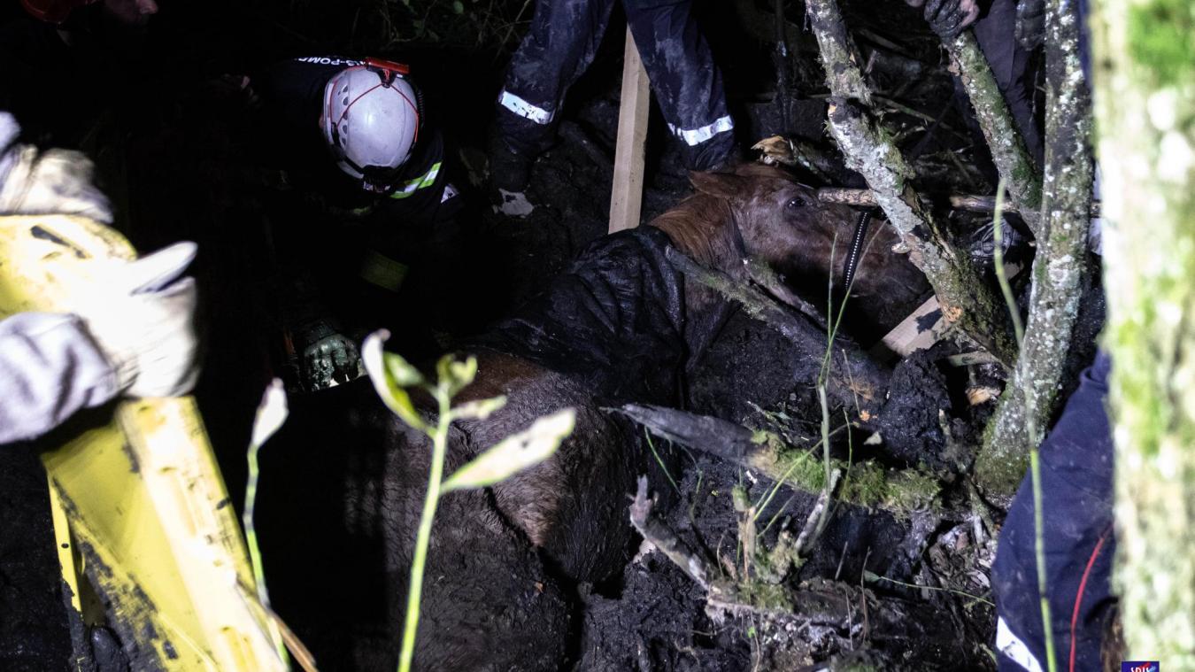 Vendredi 11 octobre, 16 sapeurs-pompiers des Vosges ont participé à une importante opération de sauvetage pour dégager un cheval embourbé jusqu'au garrot sur la commune de Frenelle-la-Petite, dans les Vosges.