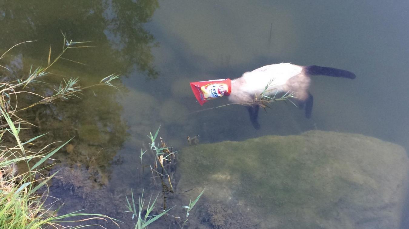 Le 14 octobre dernier, le corps sans vie d'un chat a été découvert par des promeneurs dans le lac de Chavants. L'animal avait la tête emprisonnée dans un paquet de chips.