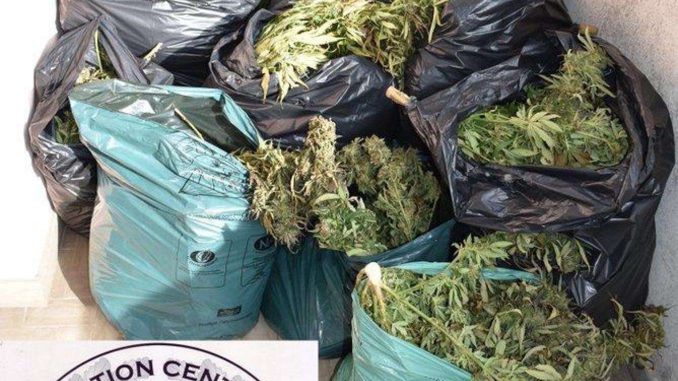 Pas moins de 21 sacs-poubelles remplis d'herbe de cannabis ont été découverts dans la dépendance d'une maison située dans l'agglomération de Thonon-les-Bains.