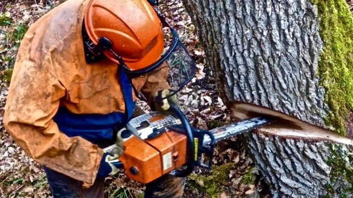 A Genève, l'abattage des arbres mobilisent des associations de défense de l'environnement.