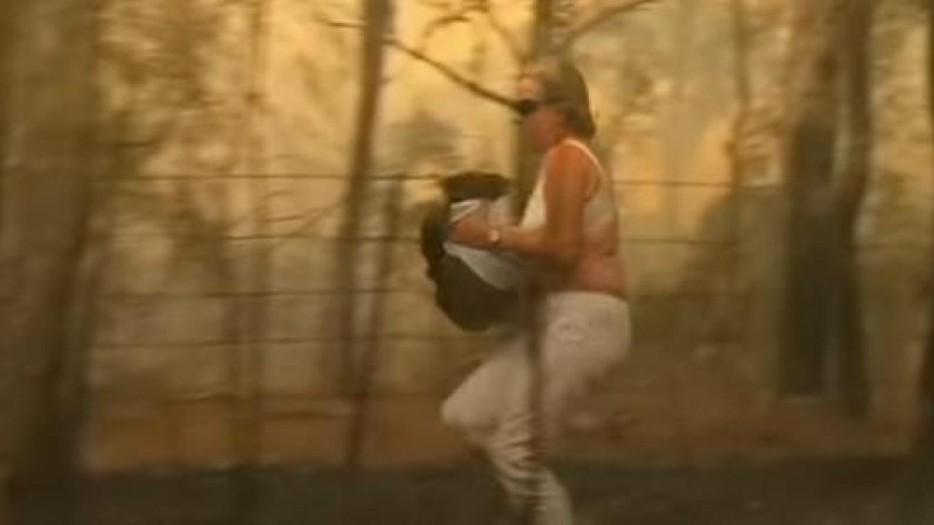 Lewis le koala reprend des forces à l'hôpital — Australie