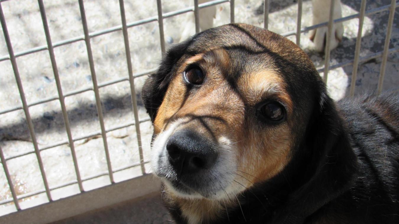 Si vous suspectez de la maltraitance, n'agissez pas seul, prenez contact avec une association pour la protection animale.