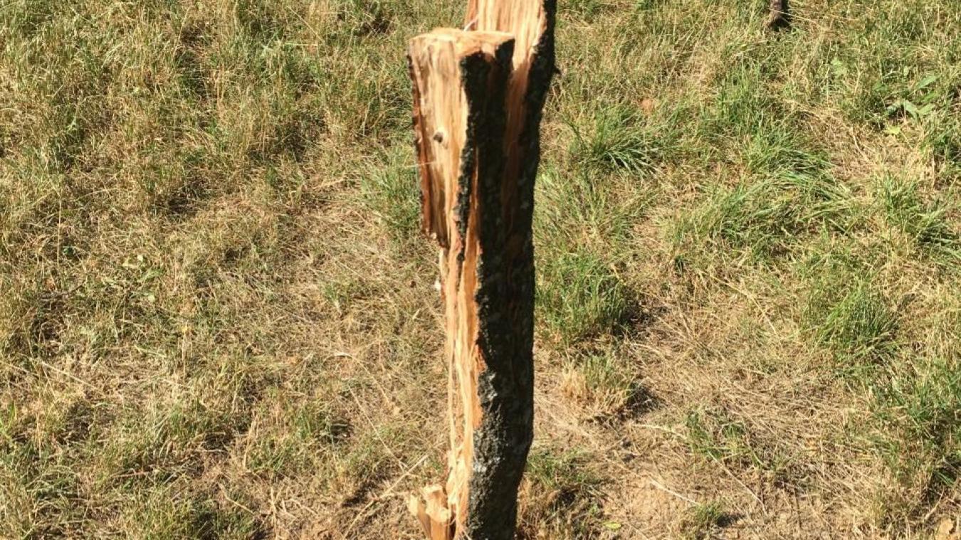 (PHOTOS) Thonon-les-Bains : des arbustes vandalisés pour allumer des barbecues
