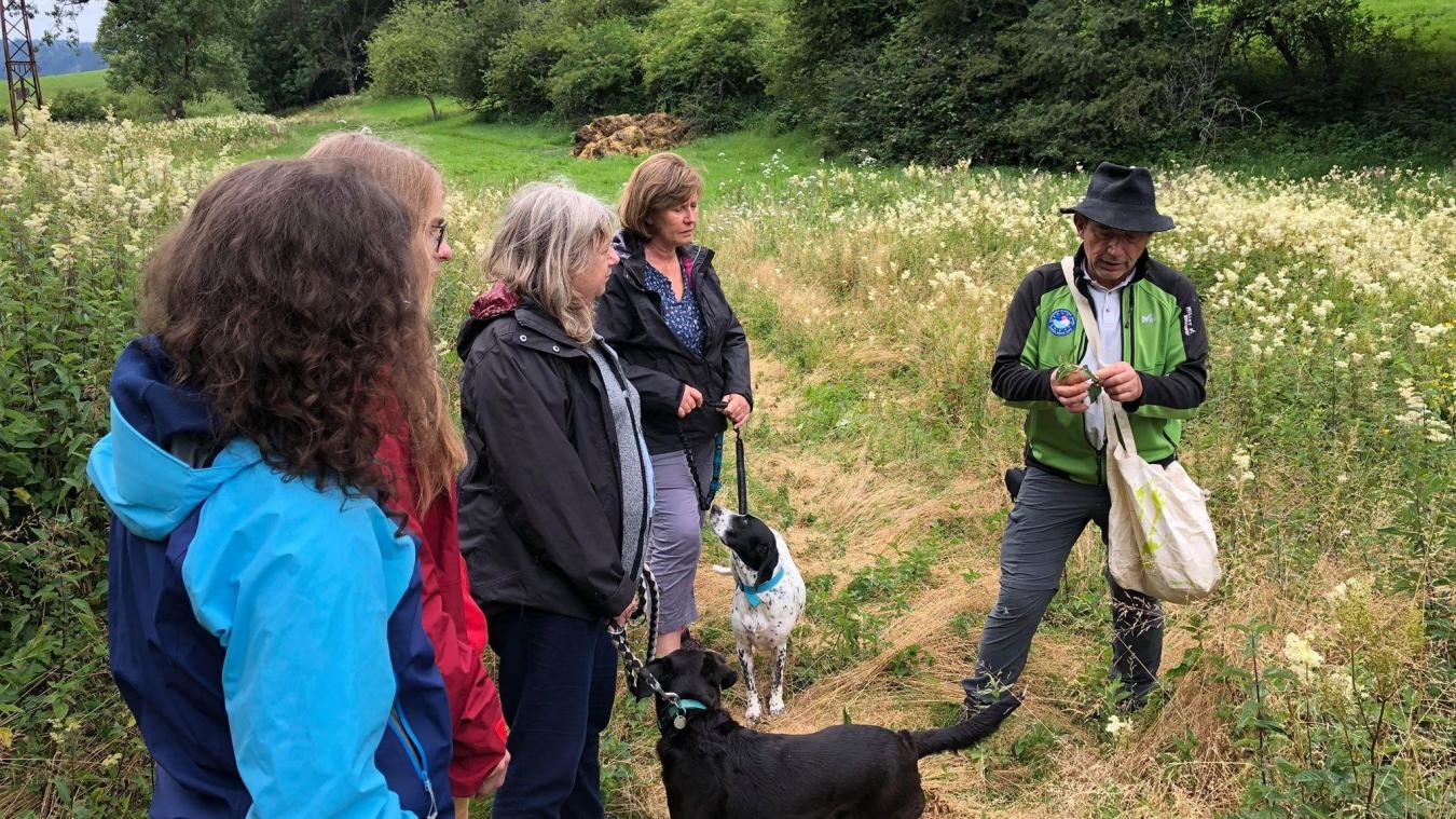 (VIDEO) Partez à la cueillette de plantes sauvages avec un accompagnateur des Monts de Genève