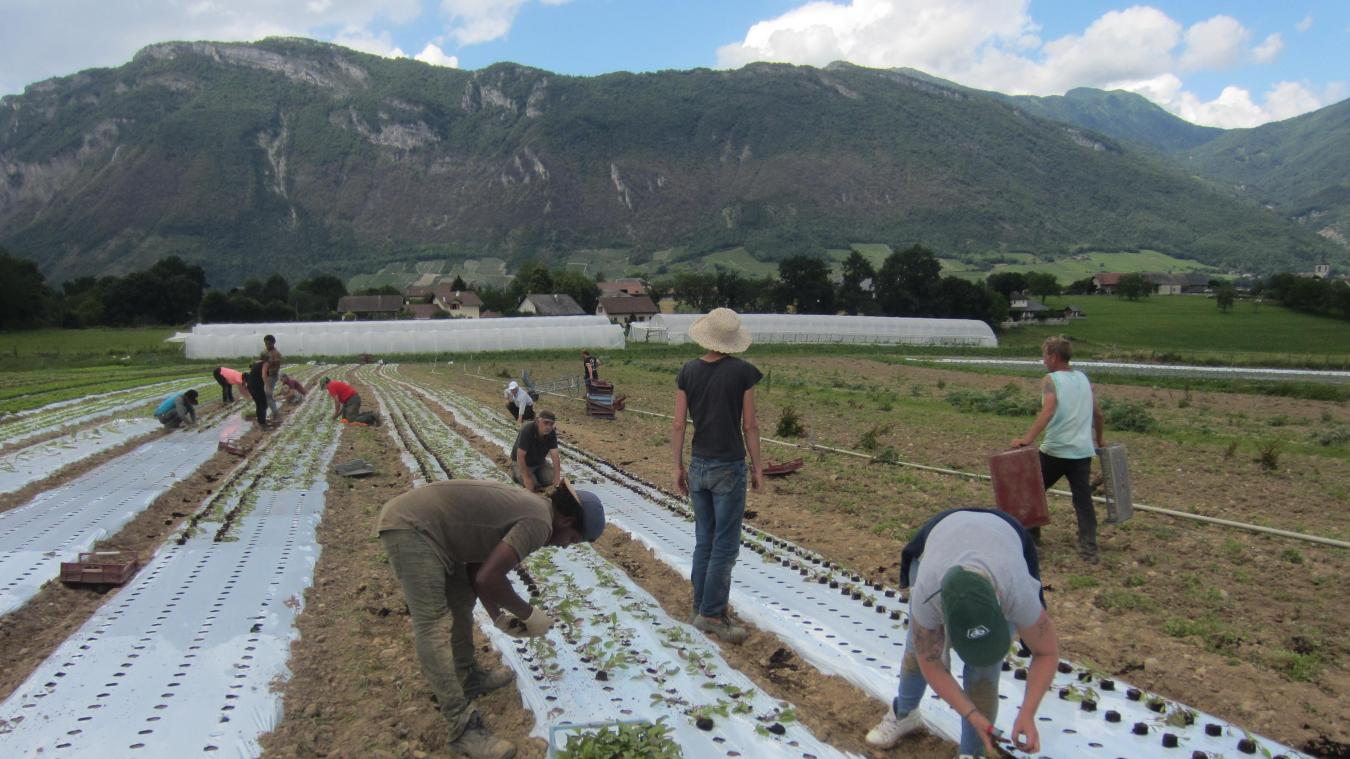 Parmi la centaine de jardins de Cocagne qui existent en France, trois sont situés en Savoie, dont Terre Solidaire à Planaise.