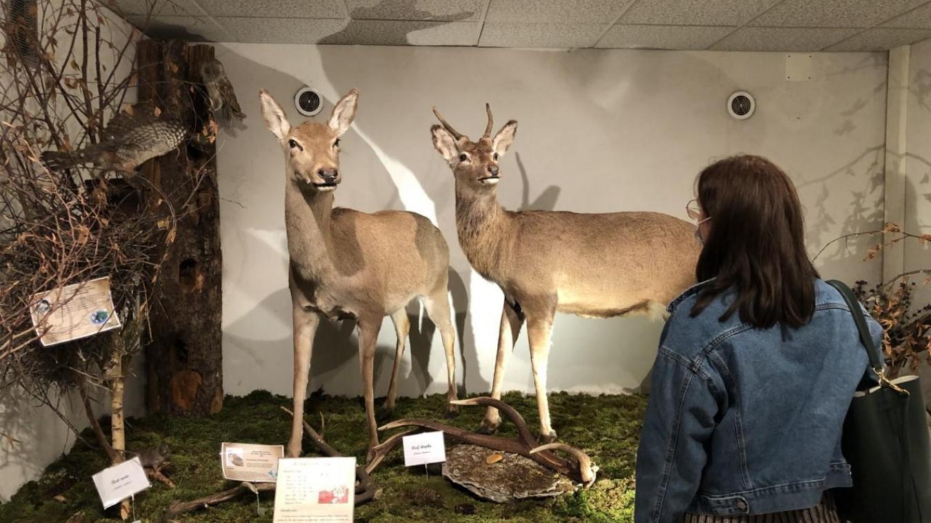 Le musée de la faune, un lieu unique pour découvrir les animaux de montagne à Bellevaux