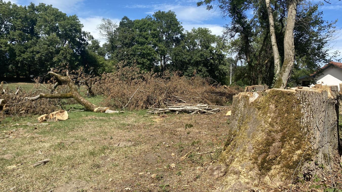 Certains arbres ont été laissés sur le sol, rendant la pâture inutilisable.