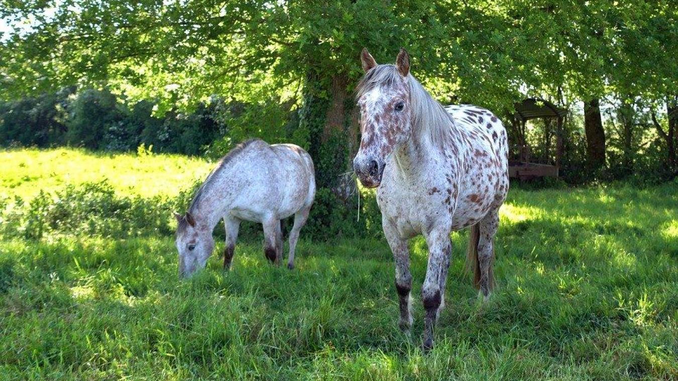 En Savoie, un cheval a été retrouvé à Albens avec le museau coupé, mais pas l'oreille. Pour l'instant aucun lien n'a été établi avec la série de mutilations.
