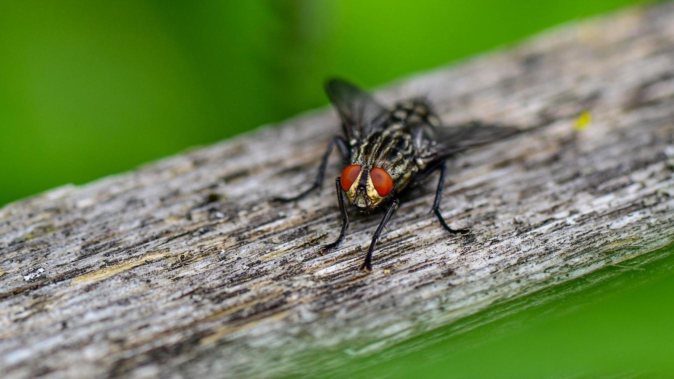En voulant chasse une mouche, l'octogénaire a provoqué une explosion.