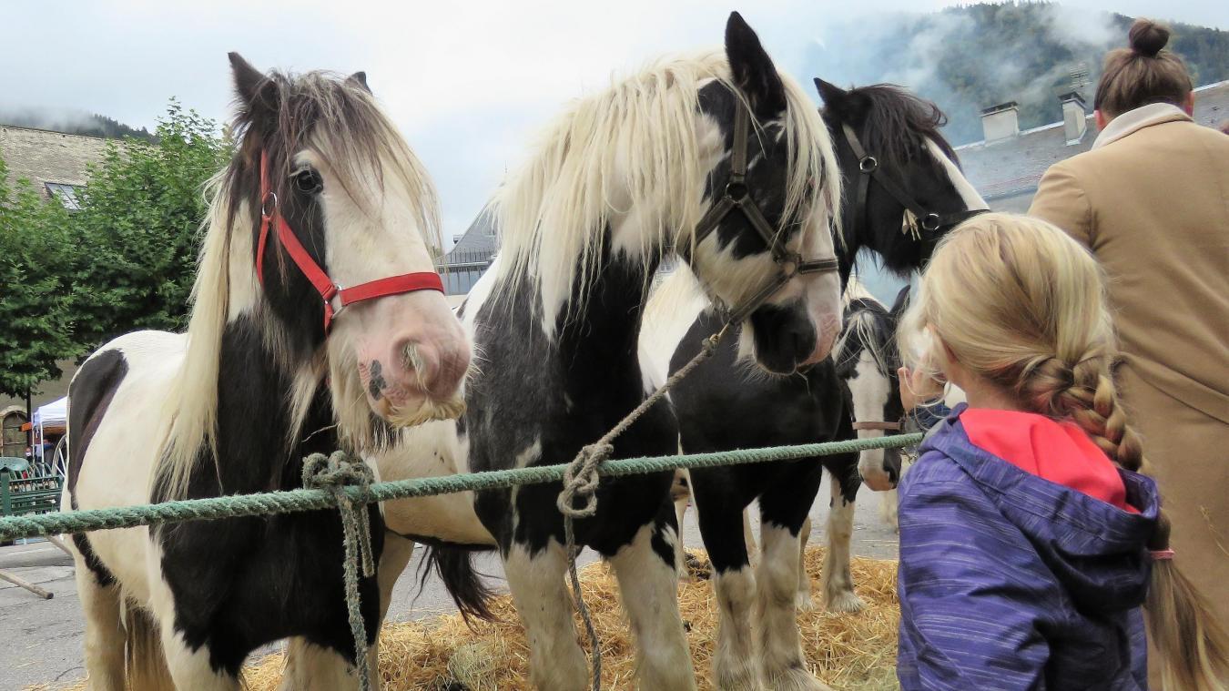 A défaut de paisibles ruminantes, le public de la foire a pu admirer les magnifiques chevaux d'Equita'Passion.