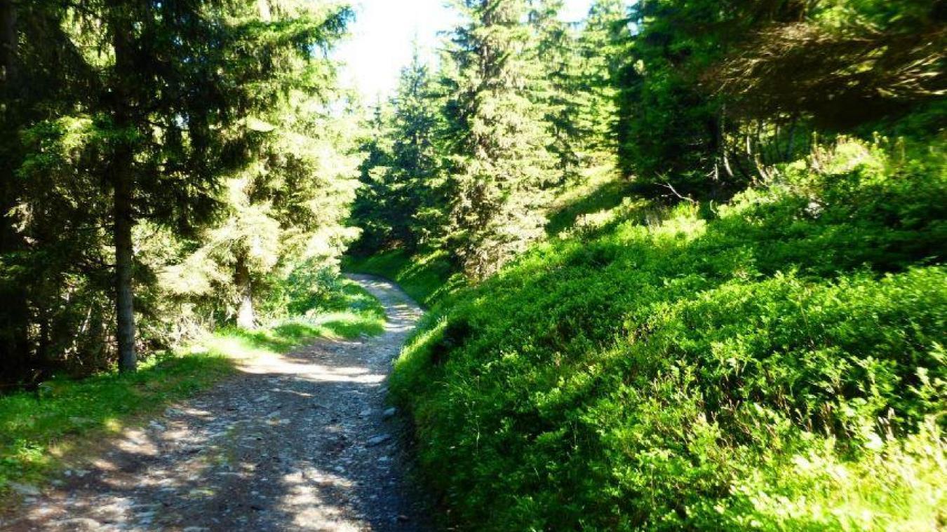 La création et le renforcement de pistes doit permettre une meilleure exploitation de la forêt.