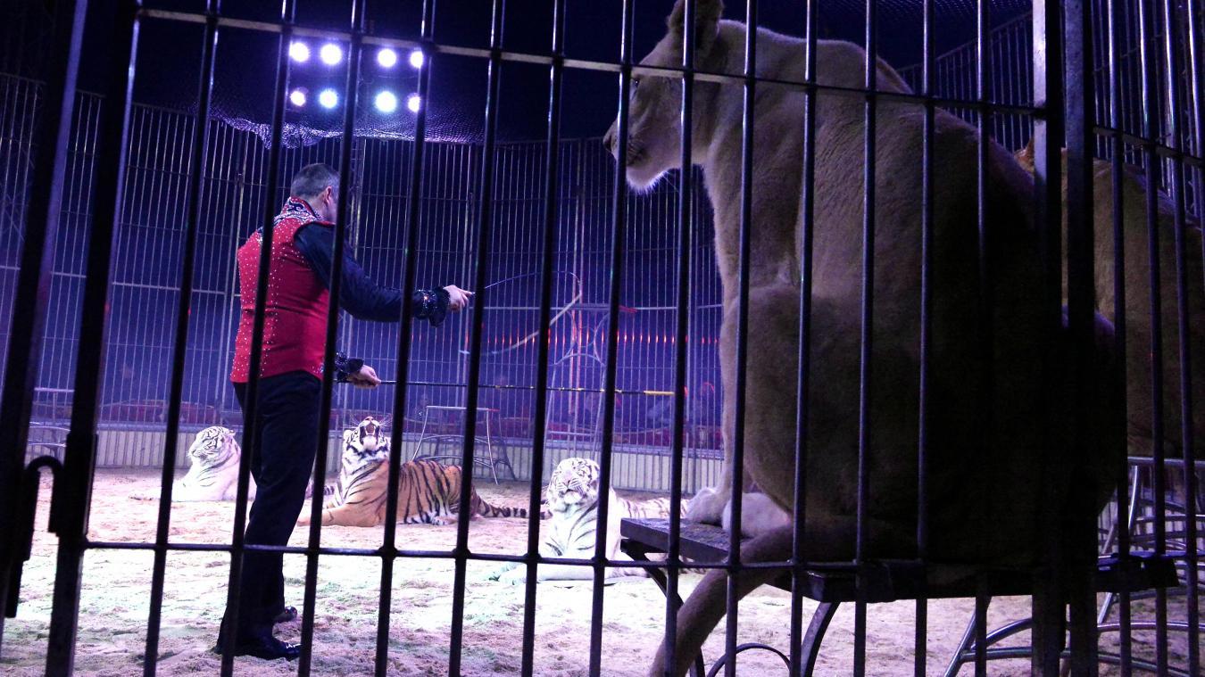 Les cirques itinérants ne pourront plus exhiber d'animaux sauvages.