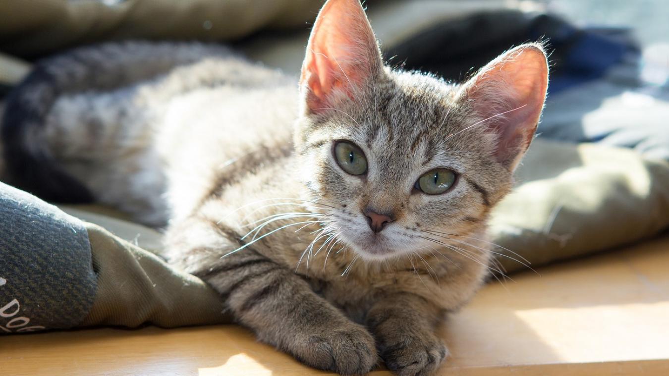 Les chats placés en famille d'accueil ne sont pas tous des chatons, mais ils n'en seront pas moins adorables  !