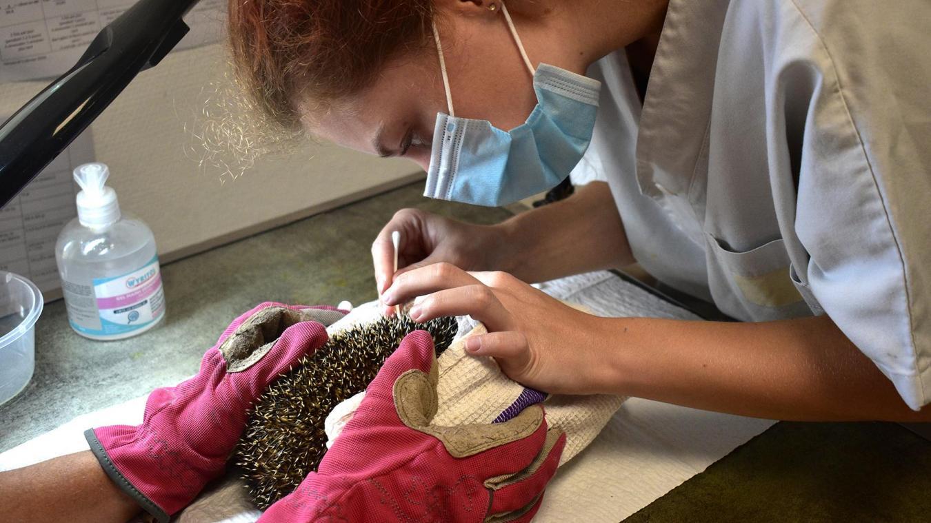 Les animaux étaient jusqu'alors soignés au rez-de-chaussée, mais Florine Coulon annonce des infirmeries supplémentaires à l'étage, actuellement en plein travaux.