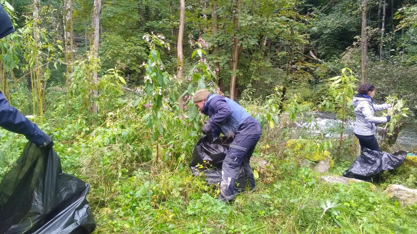 L'arrachage des plantes invasives se fait manuellement et demande du temps.