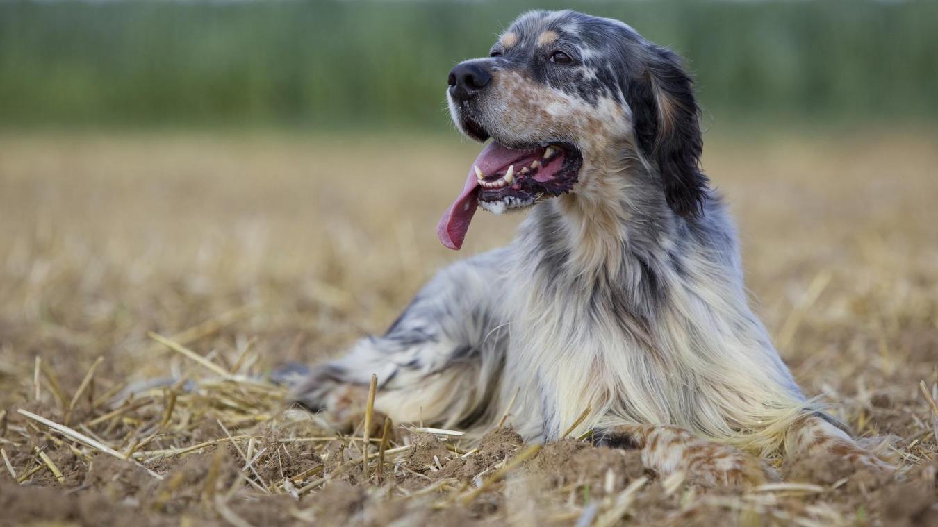 Un impôt qui a du chien
