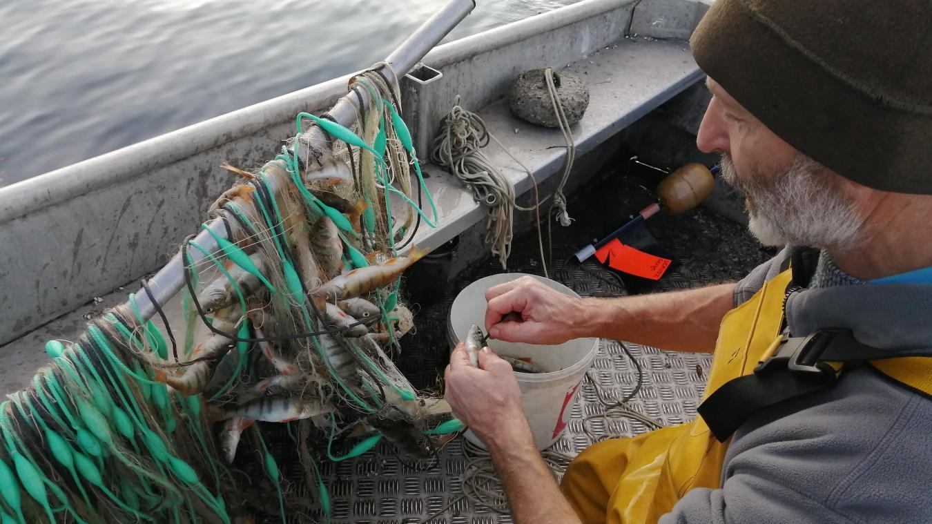 Les pêcheurs professionnels se tournent vers la perche pour maintenir leur activité.