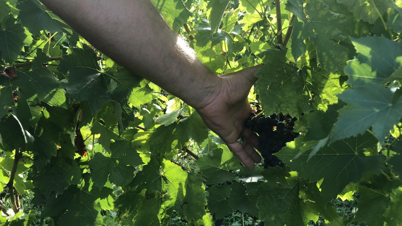 Une aide particulière sera allouée aux viticulteurs, durement touchés par le reconfinement.