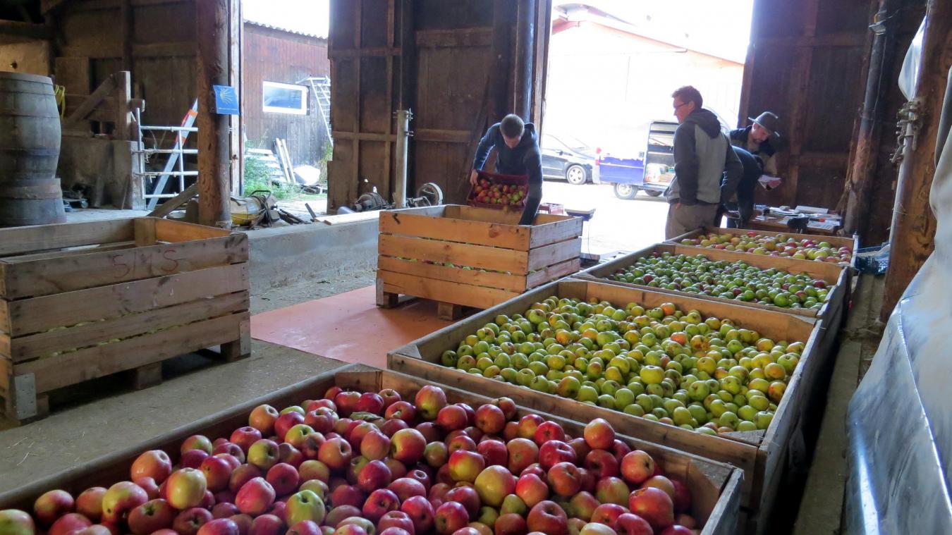 Nouveau record pour les syndicats du Salève et du Vuache cette année, avec 24 tonnes de pommes et de poires amenées par des particuliers.