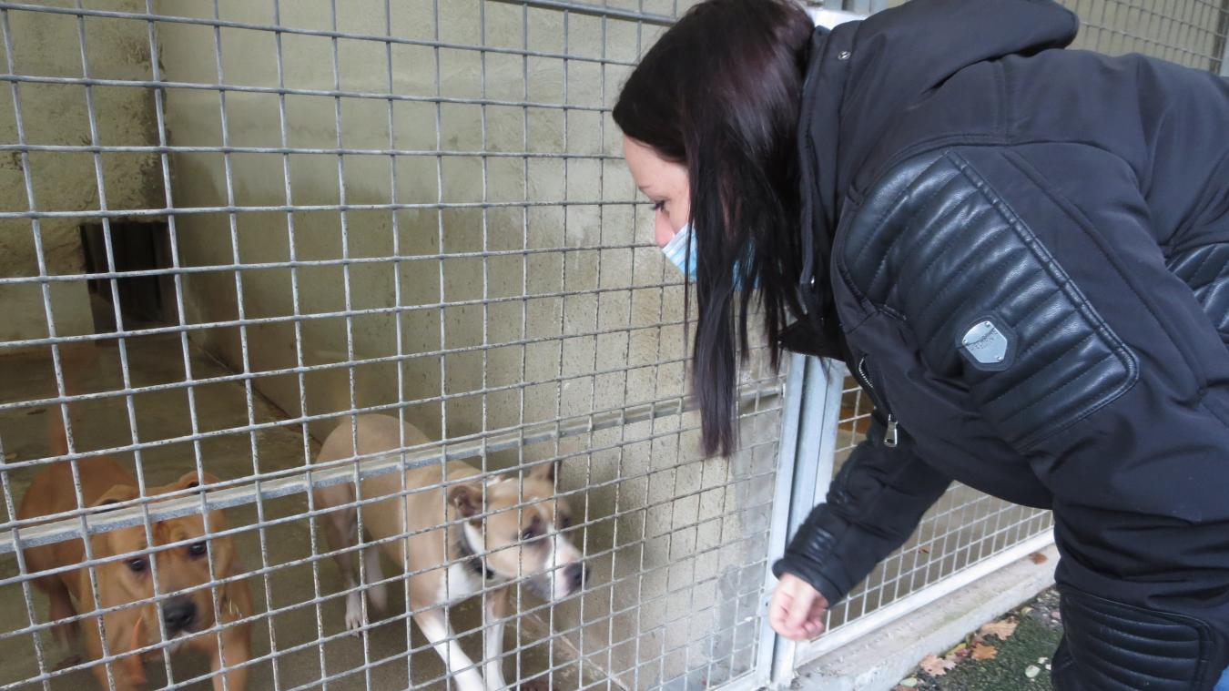 Les refuges, comme la SPA de Marlioz, ont toujours de besoin de place pour accueillir les animaux dans le besoin.