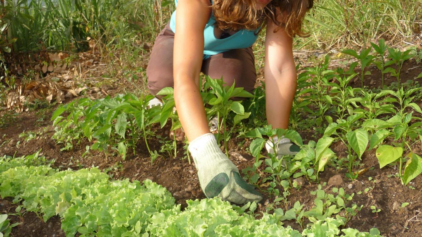 Le maintien de l'agriculture se heure à de multiples obstacles.