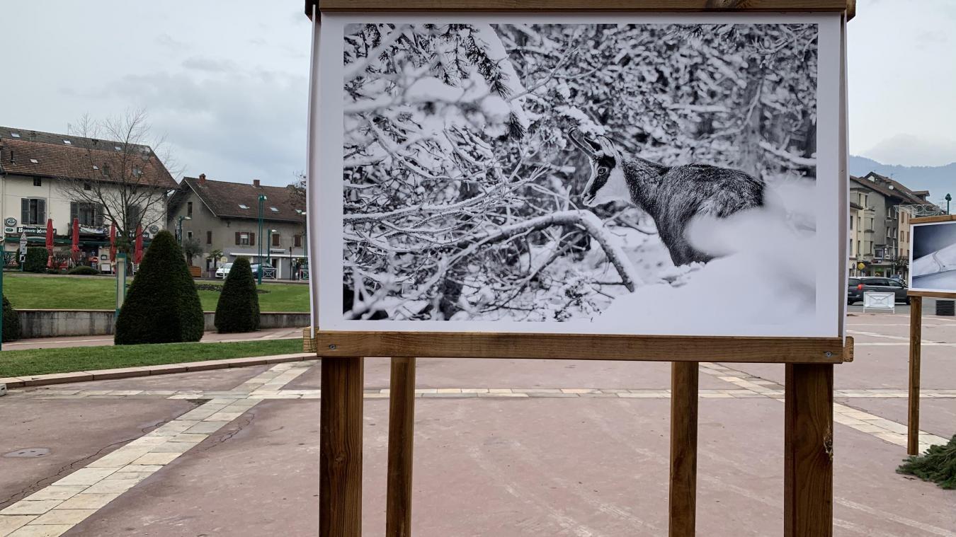 L'exposition de photos Autrement Vercors, par Stéphane Ruel, à retrouver place des Allobroges à Cluses.
