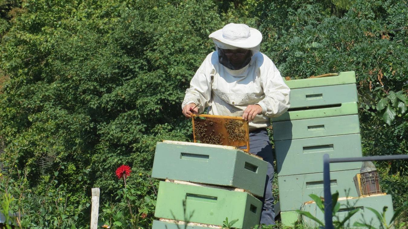 Comme il serait impoli de demander son âge à une dame, chez les apiculteurs, le nombre exact de ruches qu'on possède ne se dit pas !