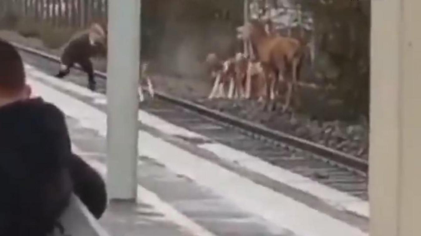 Dans une vidéo diffusée par AVA Chantilly, on voit des passagers médusés devant le passage du cerf en pleine ville. (capture AVA Chantilly)