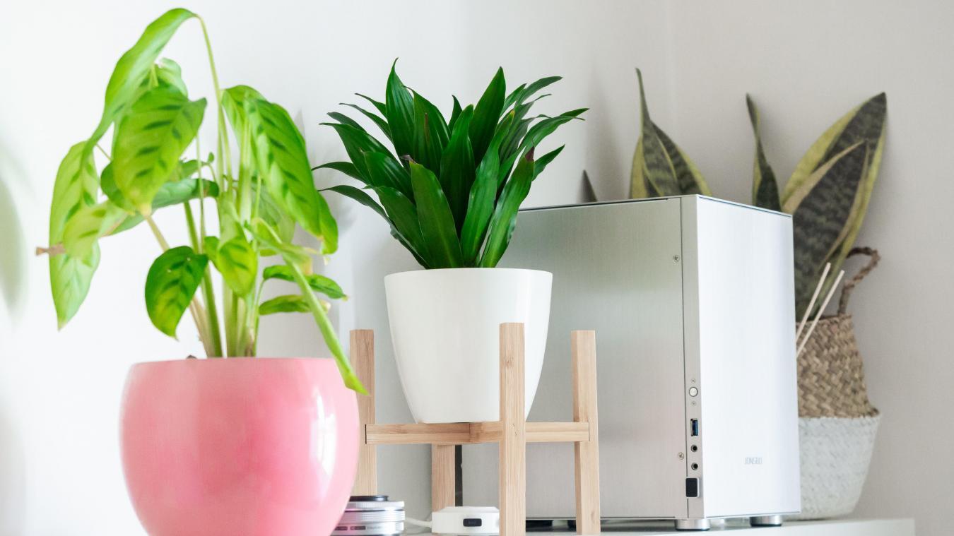 On vous dit tout sur les plantes d'intérieur.
