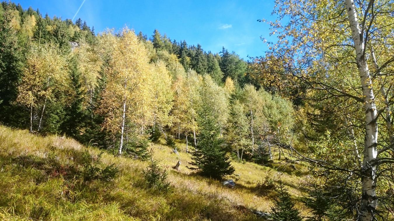 L'ONF travaille afin de maximiser la diversité des essences d'arbres dans les forêts du territoire.