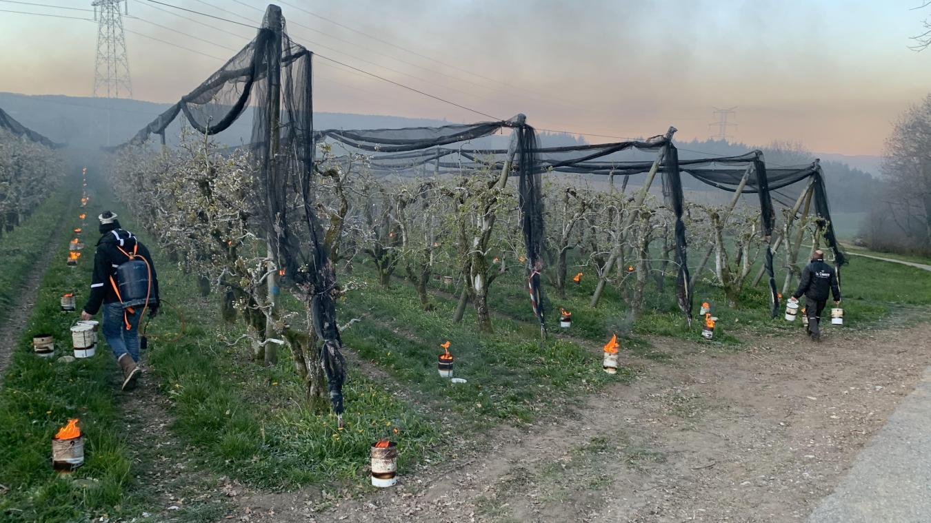 Dans les vergers, on allume des bougies pour protéger les arbres contre le froid