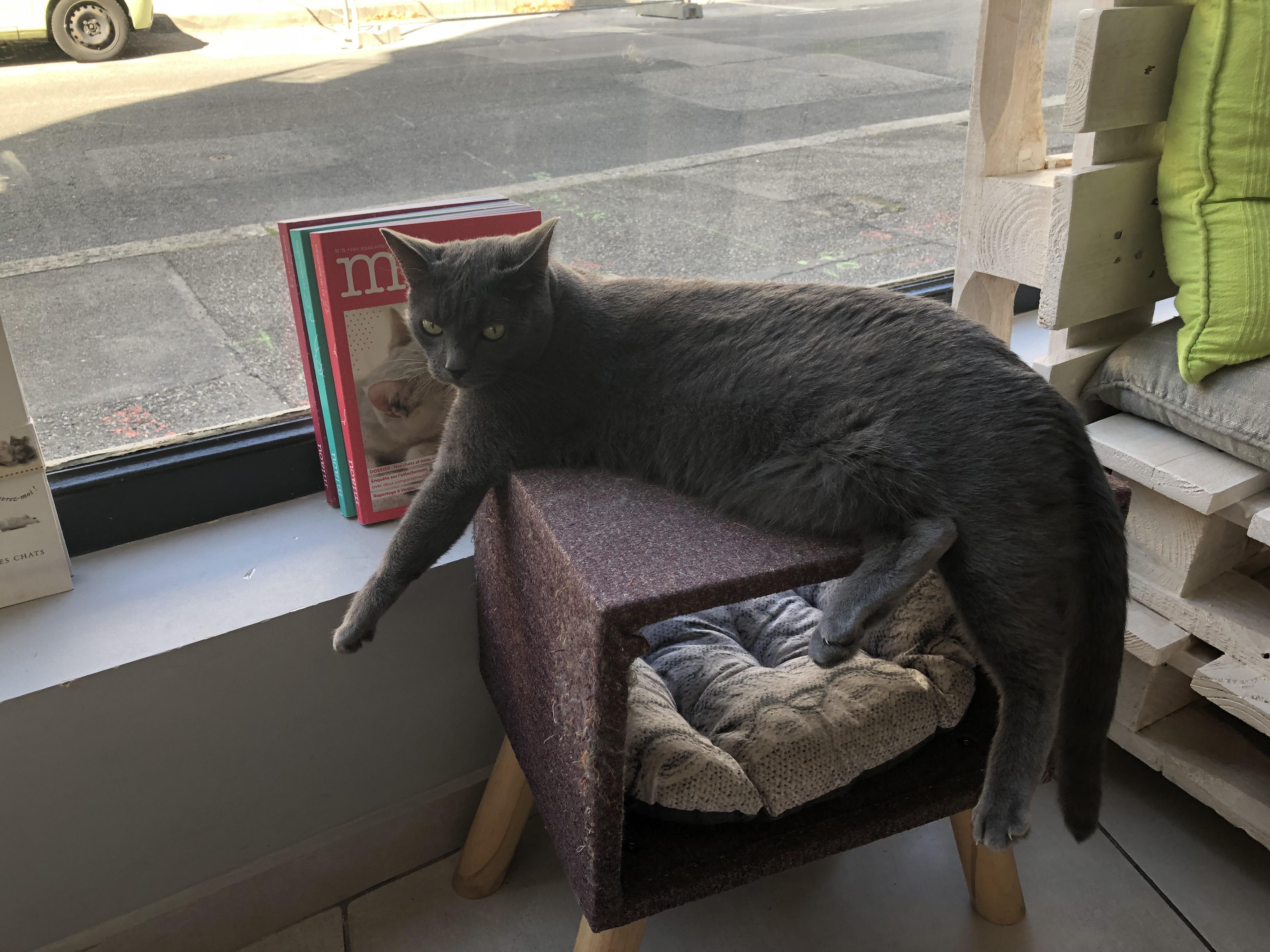 Un des endroits préférés de Mona, qui peut regarder ce qu'il se passe dehors depuis son fauteuil.