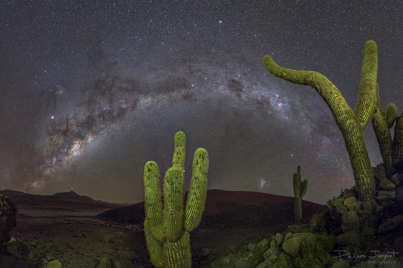 Fantômes de la Galaxie : L'arche galactique sert de décor aux cactus géants du désert d'Atacama au Chili. (Photo : Philippe Jacquot)