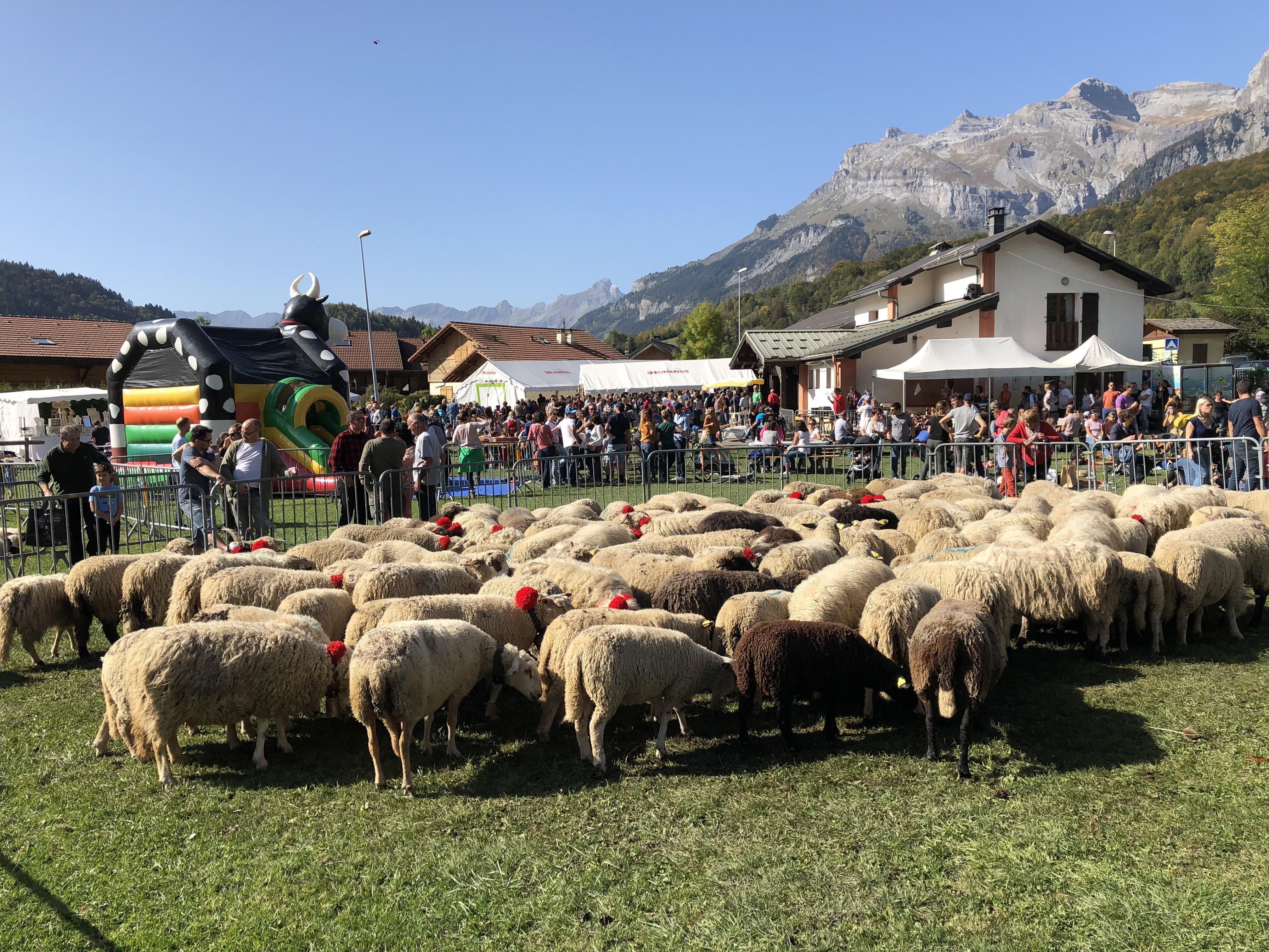 Servoz : les moutons rois de la fête !