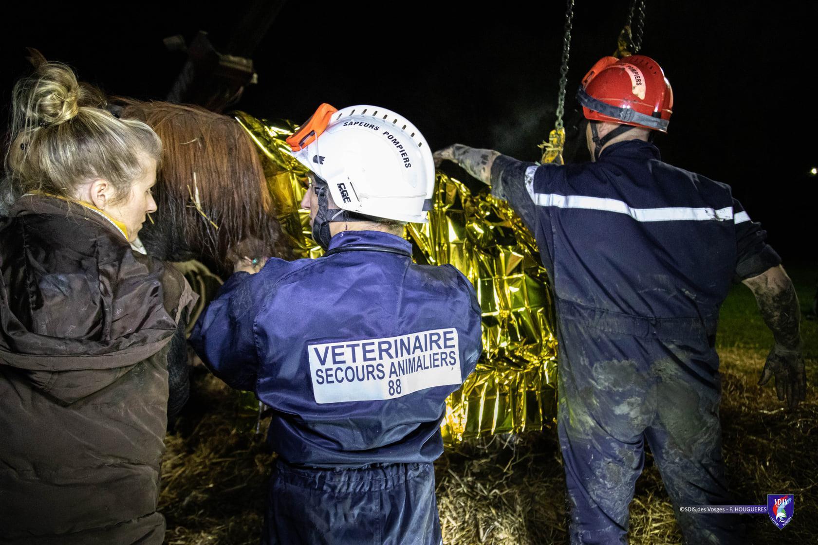 Trois jours après le sauvetage, la propriétaire de Deauville a annocné qu'il était sorti d'affaire.