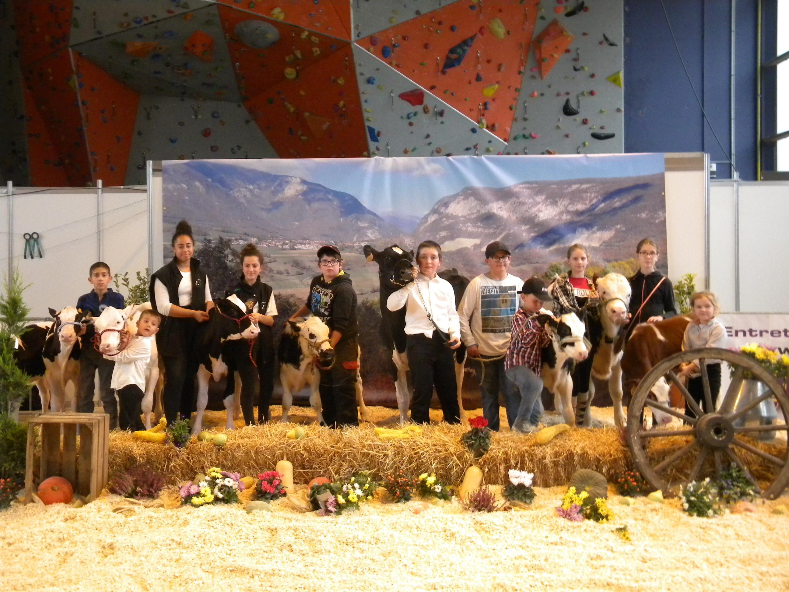 Les agriculteurs en herbes présentent leur veau ou génisse.