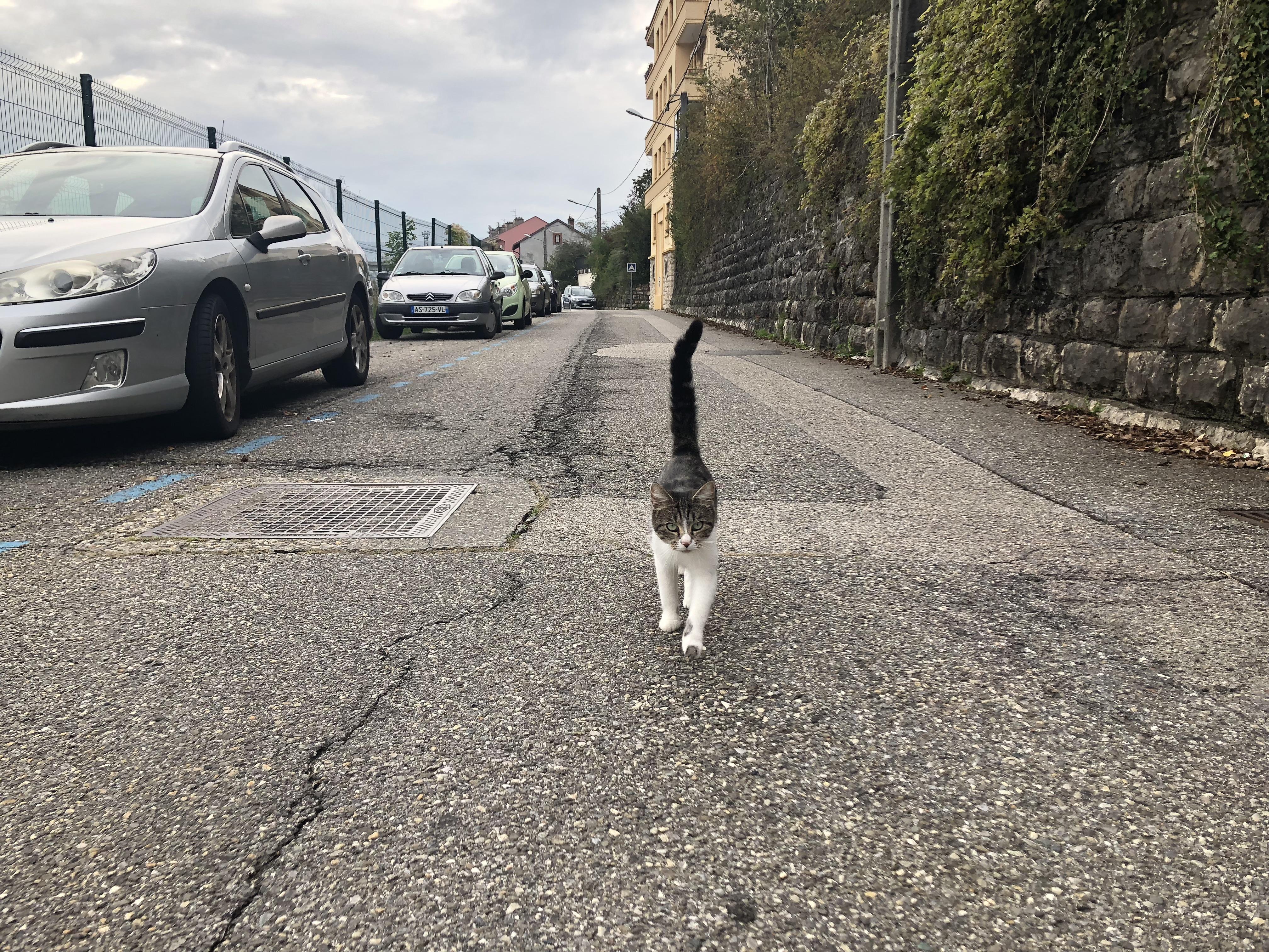 Selon quelques habitants, plusieurs chats se sont faits écraser sur cette route en octobre.