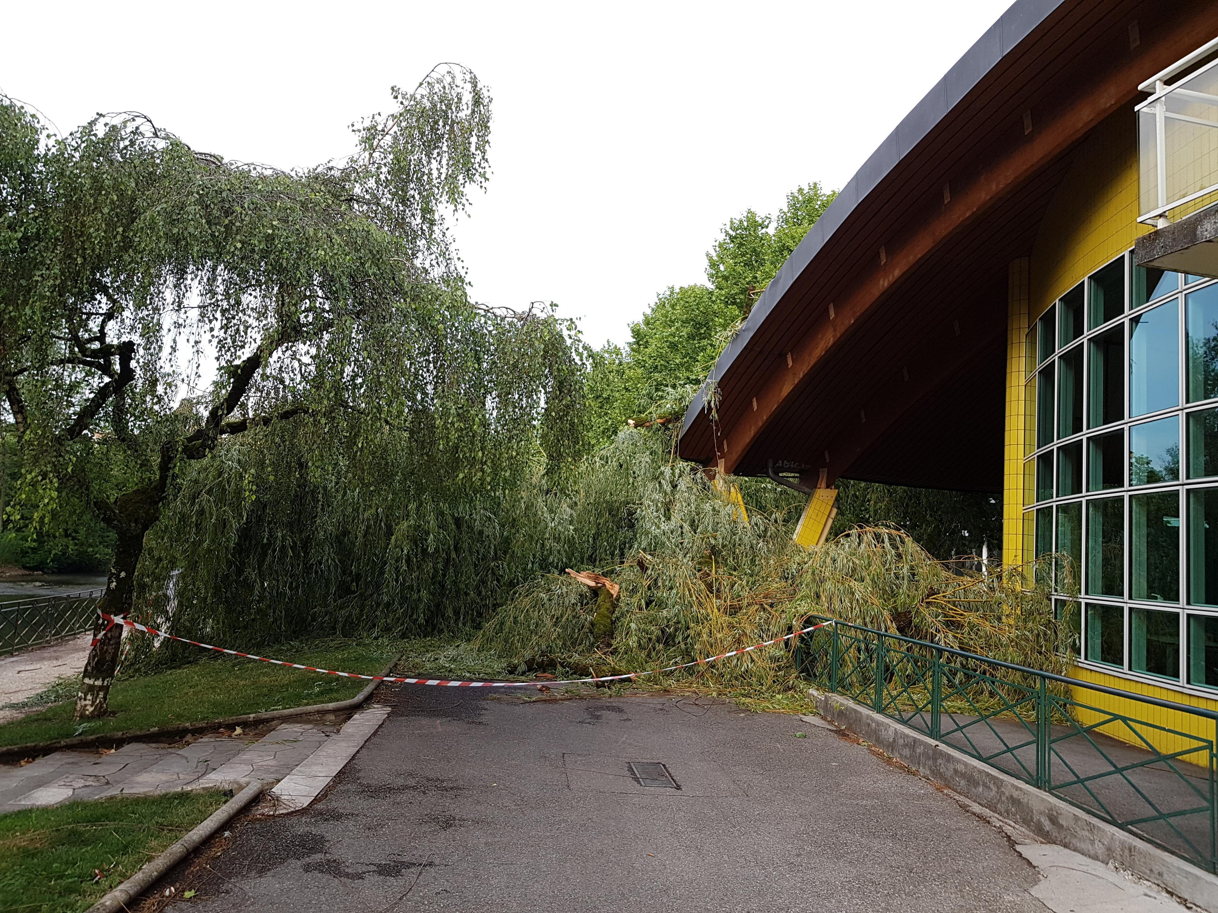 Un arbre est tombé sur l'école Vaugelas à Annecy.