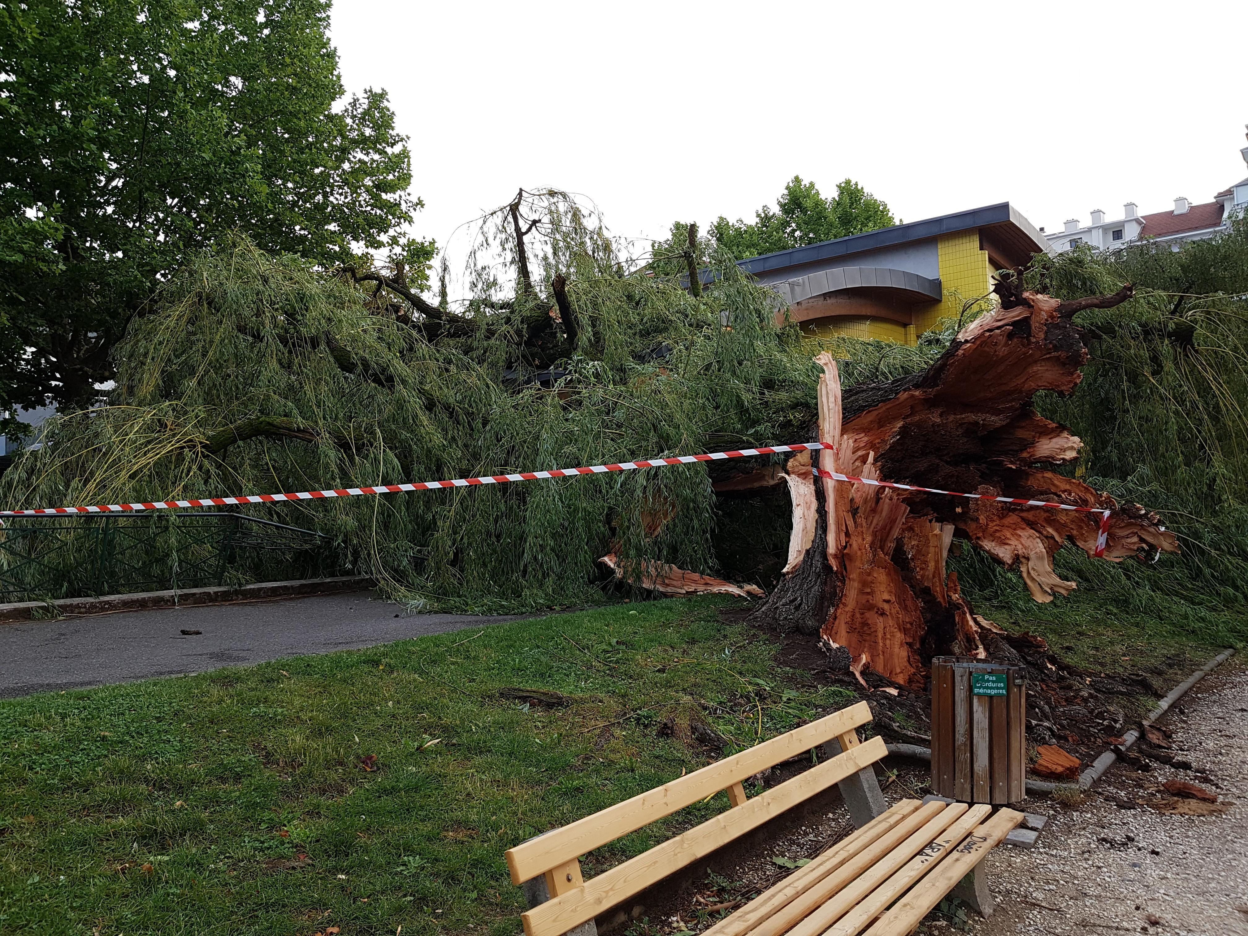 (VIDEOS) Annecy / Aix-les-Bains : des vagues impressionnantes sur le lac, un arbre tombe sur une école et des dégâts au parc de verdure