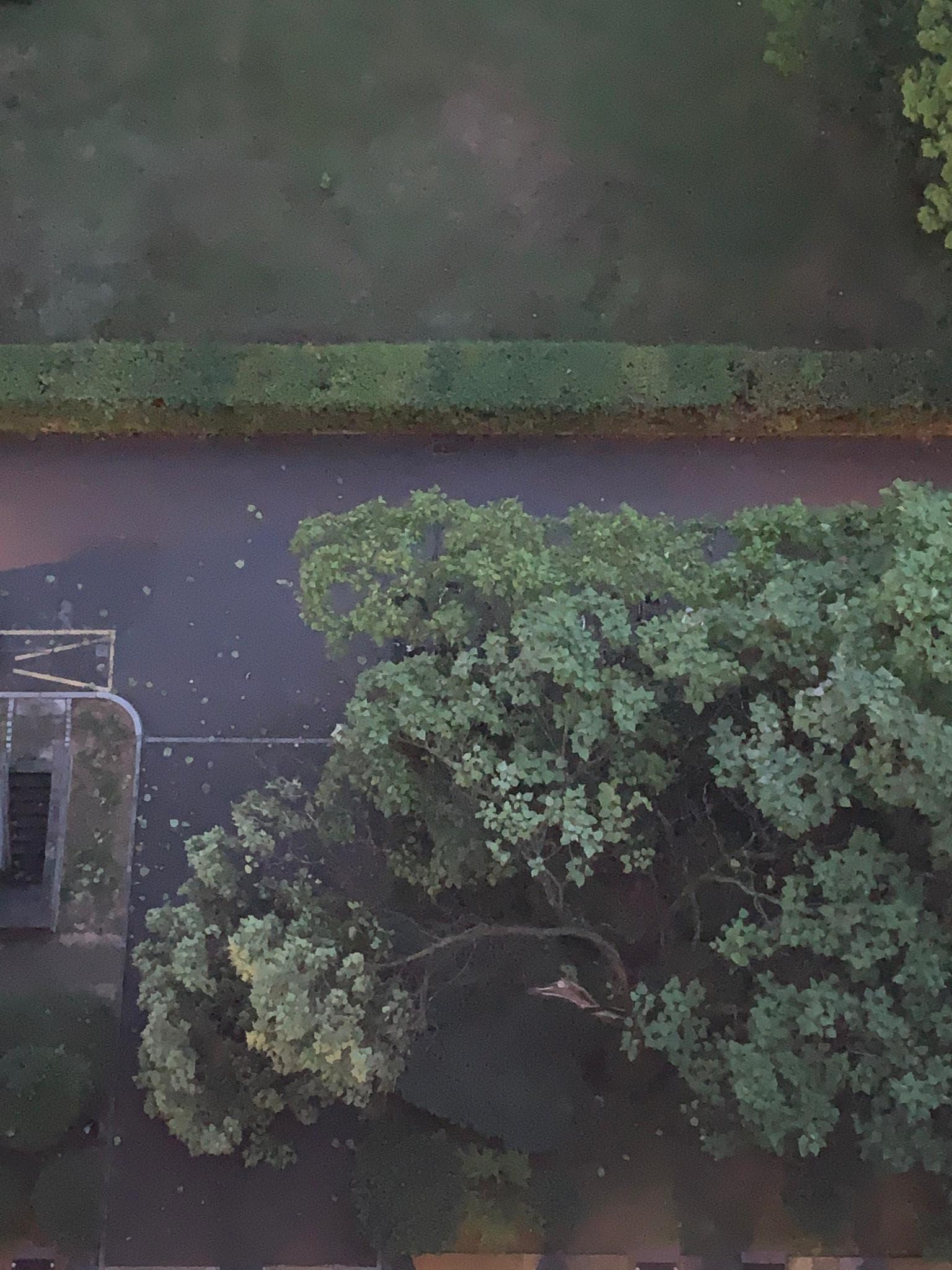 De nombreux arbres, comme ici à Onex (Genève), n'ont pas résisté à la mini-tempête.